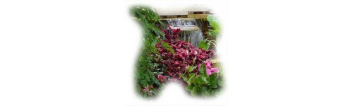 Jardim e Pomar